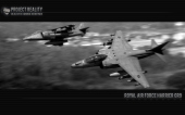 harrier_bw thumbnail